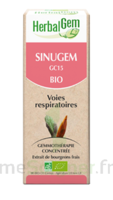 Herbalgem Sinugem Solution buvable bio Fl cpte-gttes/30ml à Bordeaux